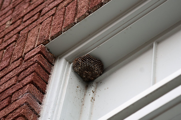 We provide a wasp nest removal service for domestic and commercial properties in Grays.